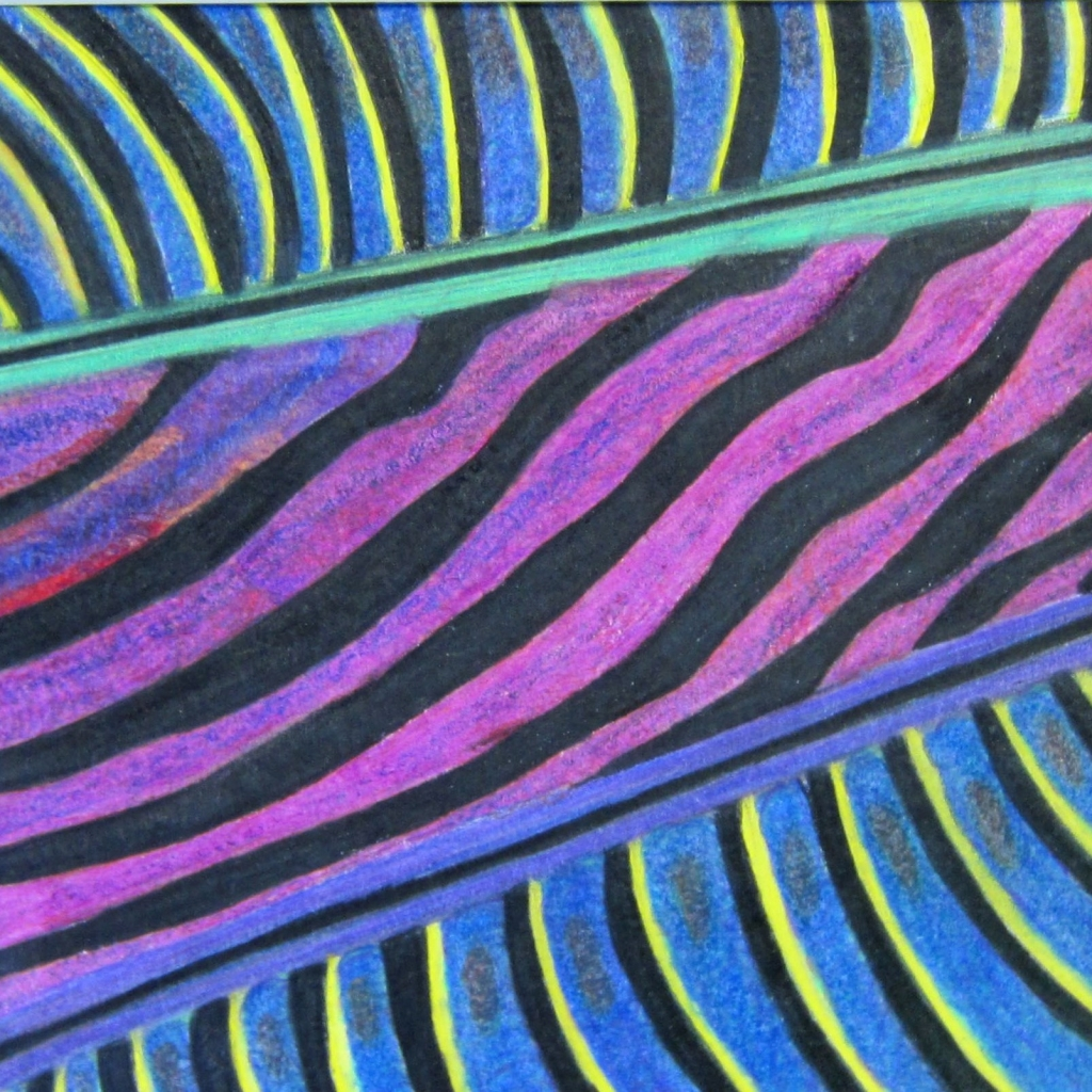 """Microscopic Feather"" Jenna Gibbs Colored Pencil 7th, FAMS NFS"